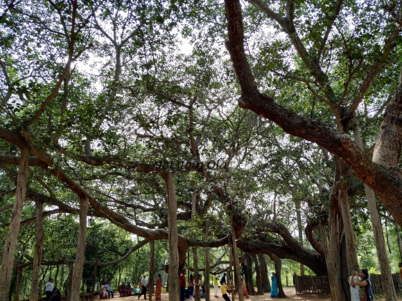 A day in Auroville